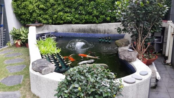 庭院鱼池浮田系统 - 城田鱼菜共生健康农场